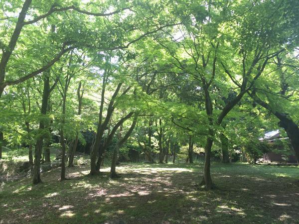 구 히코네번 마쓰바라시모 저택(오하마 저택) 정원 image