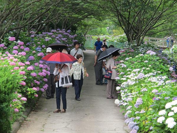 和歌山県植物公園 緑花センター image