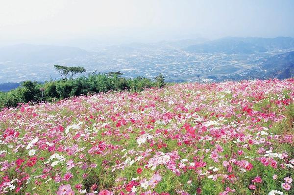 鷲ヶ峰コスモスパーク image