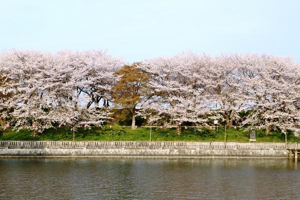 酒津公園 image