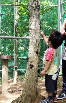 カブトムシ自然王国ムシムシランド カブトムシ自然観察園 image