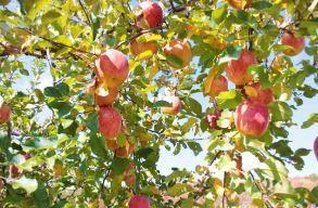 마루카 사과 농장 image