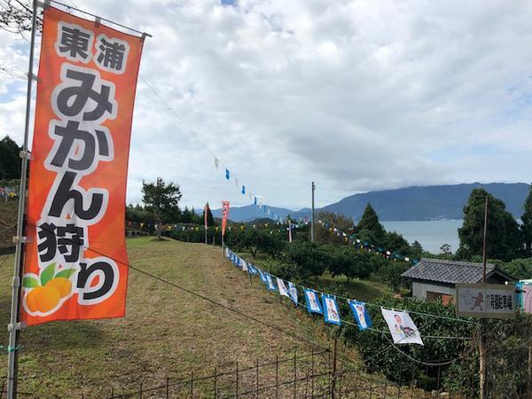 敦賀東浦みかん狩り園 image