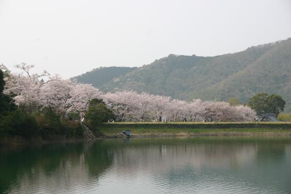 亀池公園 image