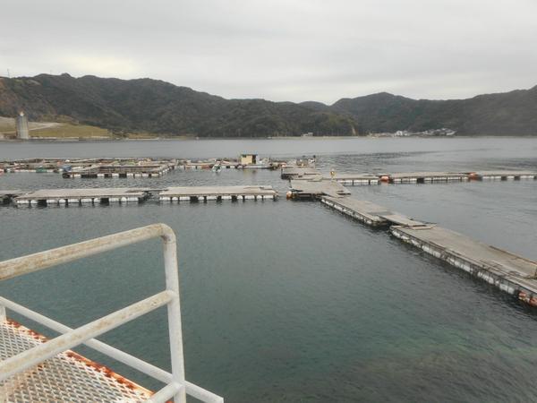 由良海つり公園 image