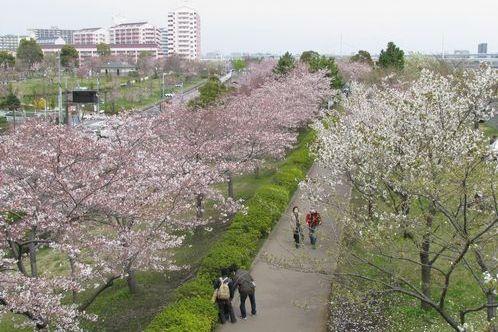 고마쓰가와 센본자쿠라 벚꽃길 image