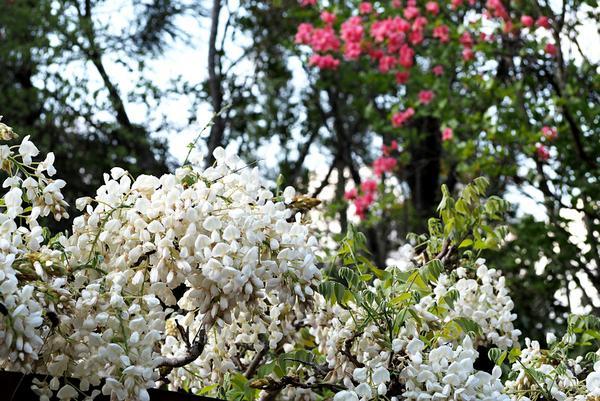 香山寺市民の森 image