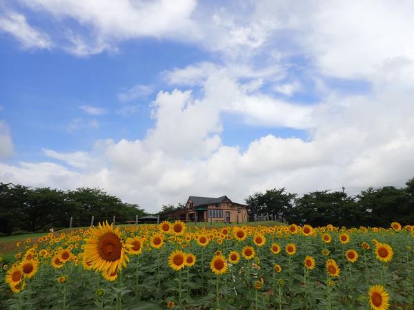 東松山市農林公園 image