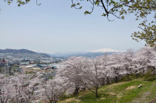 寒河江公園さくらの丘 image