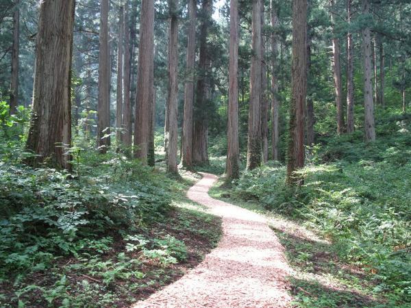 大美輪の大杉 image