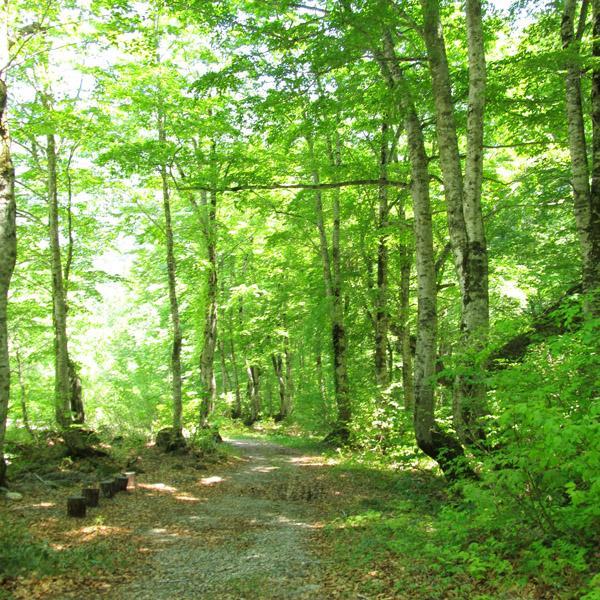 森林セラピー基地 ブナの森 温身平 image