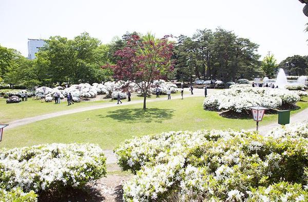 松ヶ池公園(白つつじ公園) image
