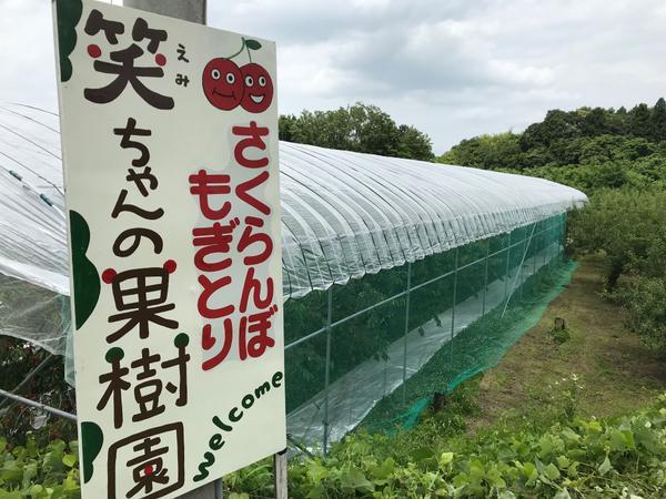 笑ちゃんの果樹園 image