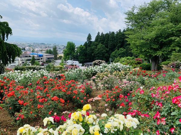 双松バラ園 image