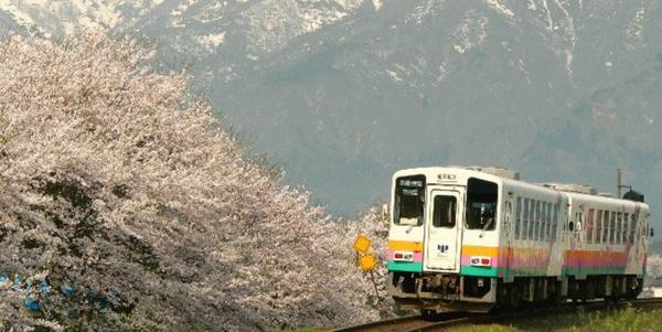 오키타마 벚꽃 회랑 image