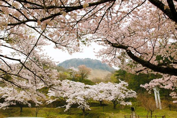 船上山万本桜公園 image