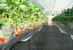 小林農園 image