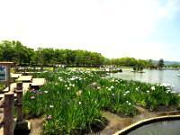 あやめ池公園 image