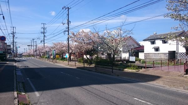 加茂川沿い image