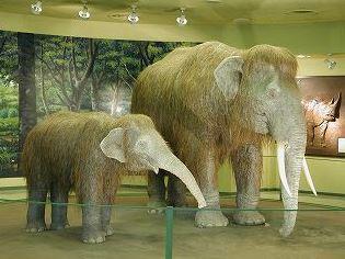 倉敷市立自然史博物館 image