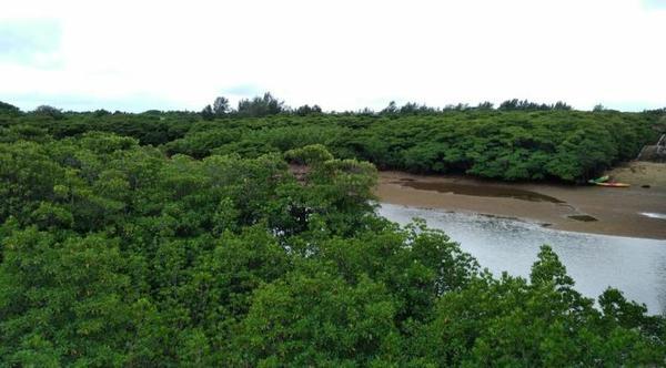 宫良川红树林 image