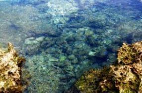 熱帯魚の家 image
