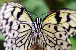 亜熱帯植物楽園 由布島 image