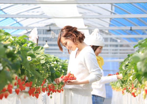 上千野觀光體驗果樹園 串間草莓田 image
