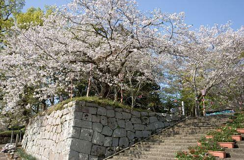 舞鶴公園 image