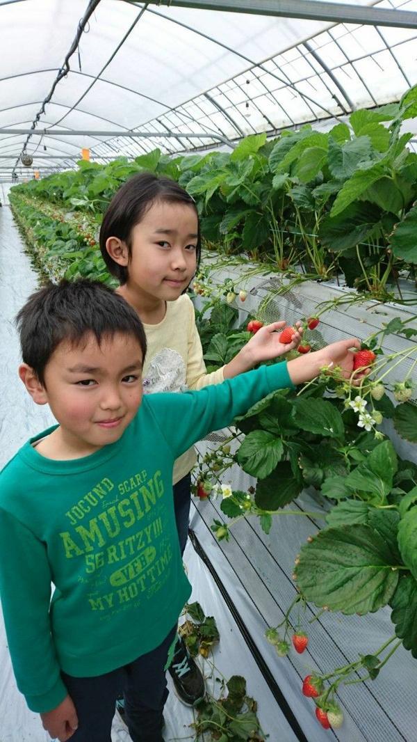 水間草莓園 image