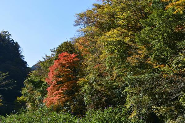 五ヶ瀬渓谷 image