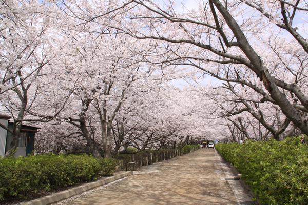 戦場ヶ原公園 image