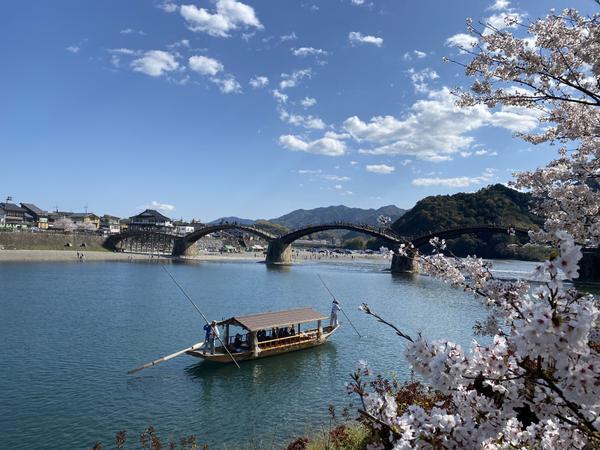 錦帯橋 春の遊覧船「さくら舟」 image