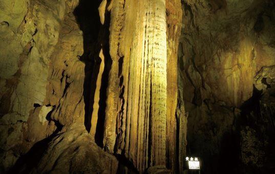 黄金柱 image