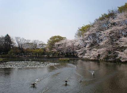 菊名池公園 image