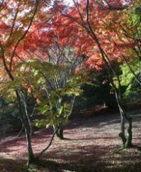 修善寺温泉の紅葉(温泉街・自然公園・虹の郷) image