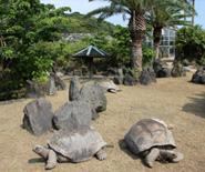 東京都立大島公園動物園 image