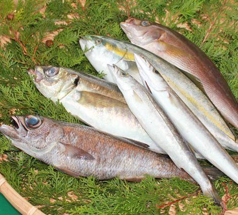 丸義鮮魚 image