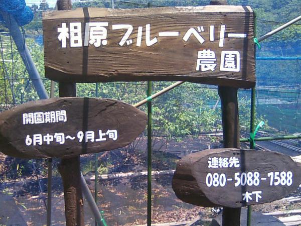 相原ブルーベリー農園(収穫型観光農園) image