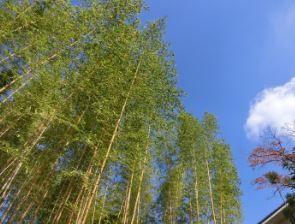 高山竹林園 image