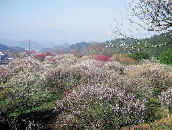 嘉麻市梅林公園 image