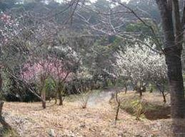 仙凡荘 image