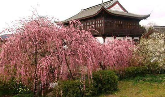 御津自然観察公園 世界の梅公園 image