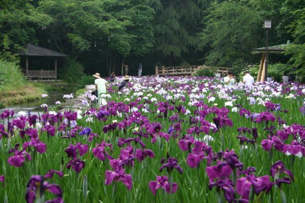 行田公園 image