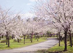 魚津総合公園 image
