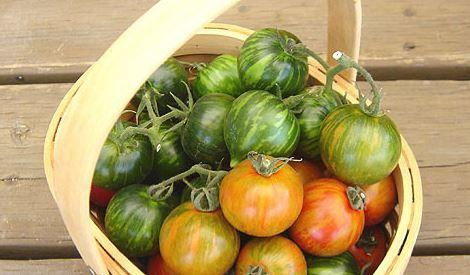 観光農園トマトファーム image